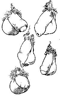 формы пениса мужчины-1