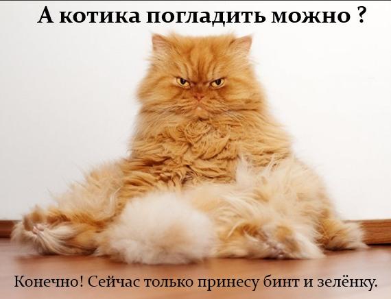 а котика погладить можно