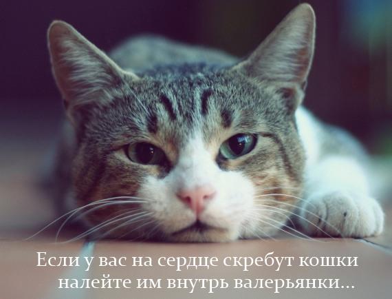если на сердце скребут кошки