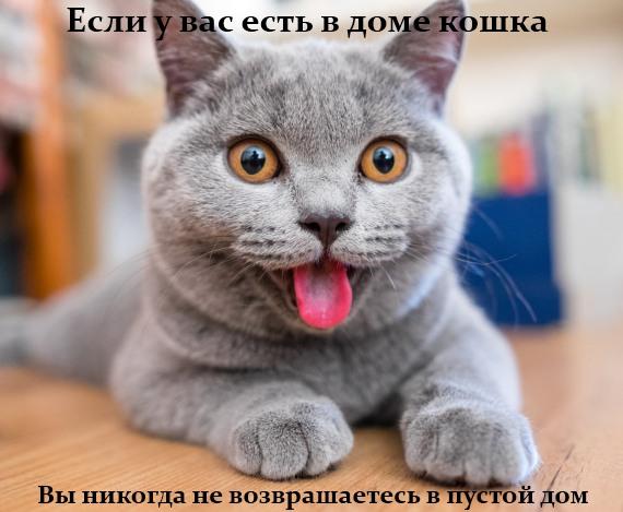 если у вас есть в доме кошка