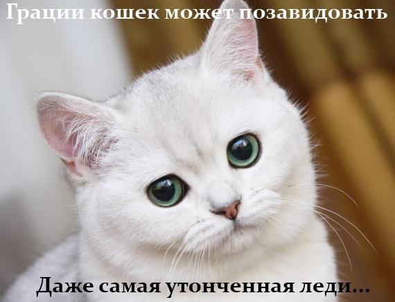 грации кошек может позавидовать