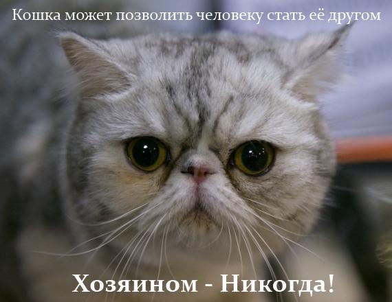 кошка может позволить человеку
