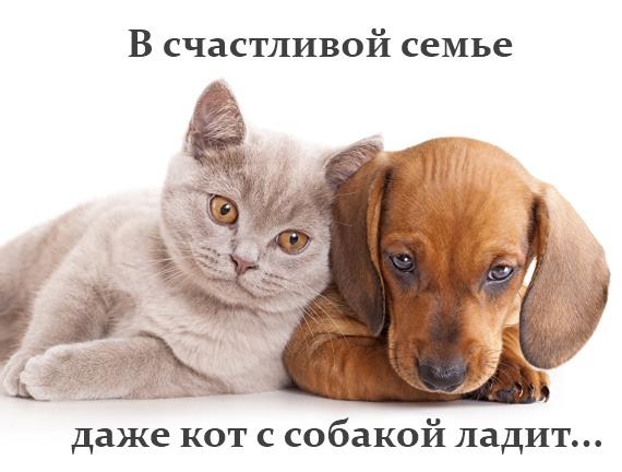 лучшие мемы о котиках и кошечках