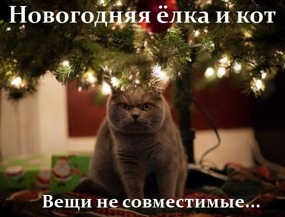 мем - новогодняя ёлка и кот