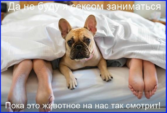 мемы - собака смотрит