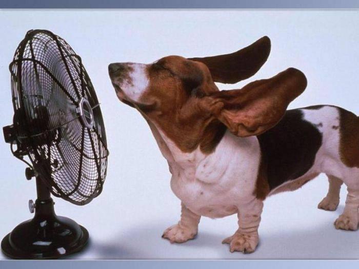 перегревание животных на солнце