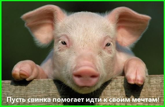 пусть свинка помогает идти к своим мечтам