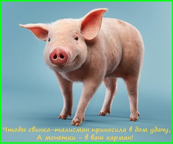 свинка талисман на удачу