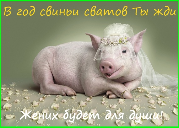 в год свиньи сватов ты жди