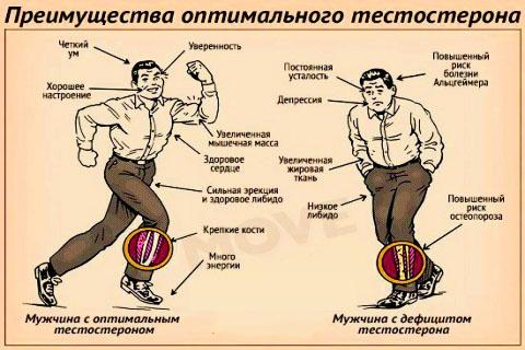 vliyanie-testosterona-na-mujchinu